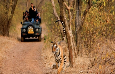 Safari to Amazing Rajasthan